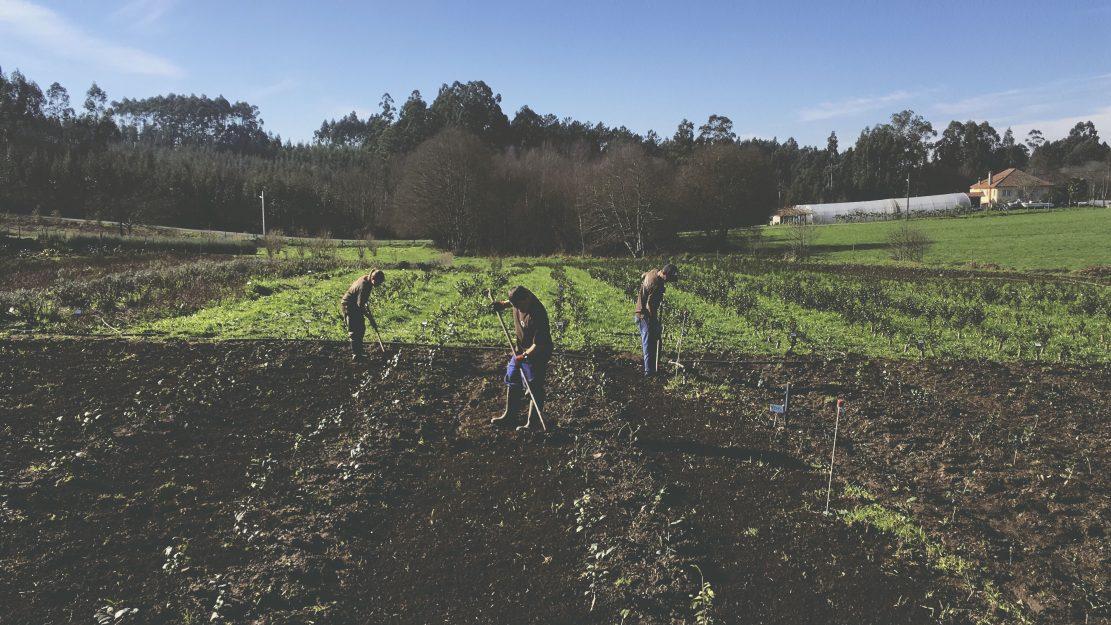 3 personas trabajando en los cultivos de orballo